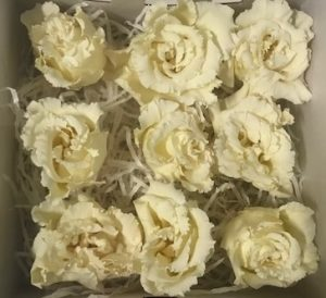 Preserved Lisianthus Yellow