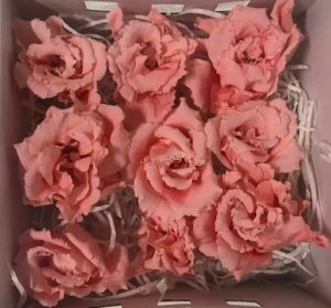 Preserved Lisianthus Salmon