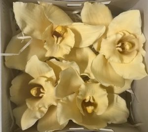 Preserved Cymbidium Yellow