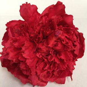 Preserved Peony Red