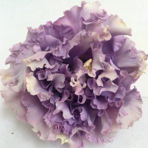 Preserved Lisianthus Purple